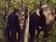 Как ебутся слоны
